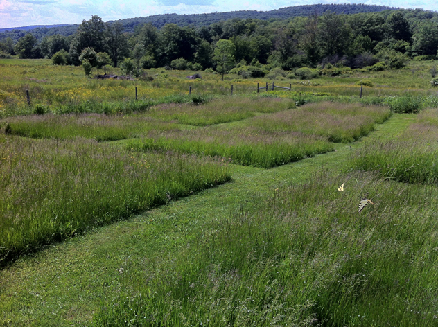 Pattern Meadow: late summer un mown squares of grass.