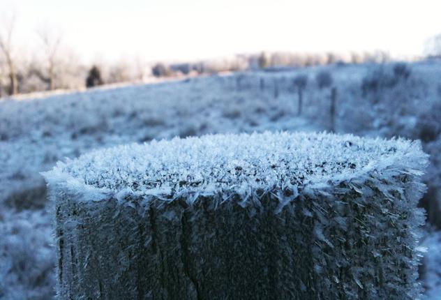 frozen post