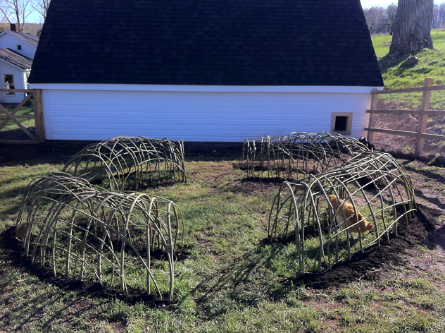 willow hoops for chickens before willow leafed out