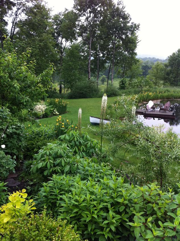 Yellow flag irises allowed in white garden