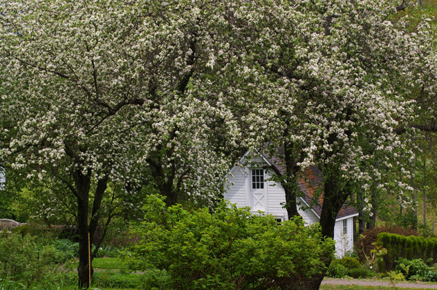 Ice house seen through apple blossom