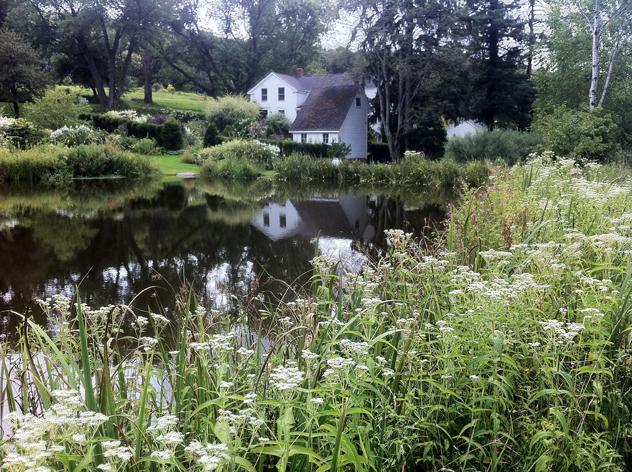 Boneset predominates around pond