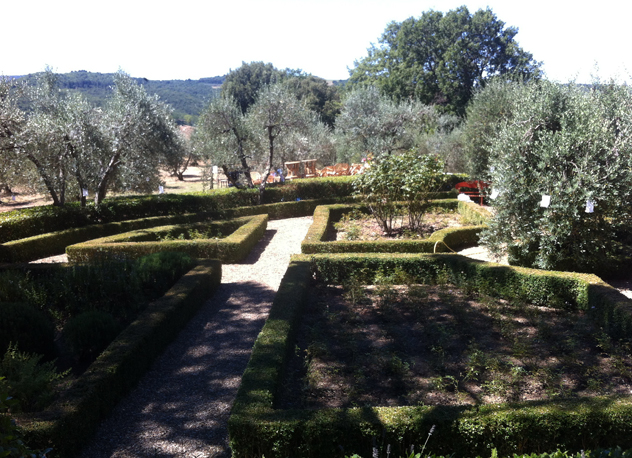 Olive grove softens the boxwood hedging. Tuscan Garden