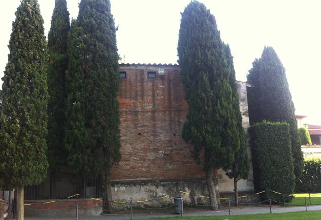Mature cypress