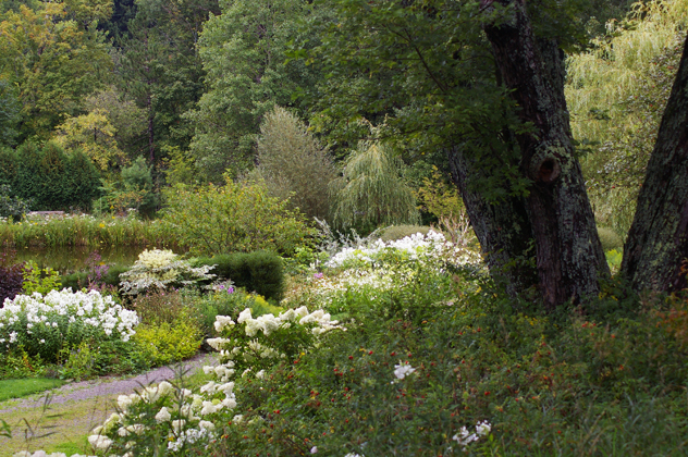 The whites predominate in the August landscape