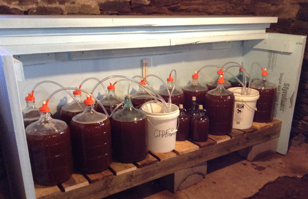 Fresh apple juice in glass carboys for fermenting