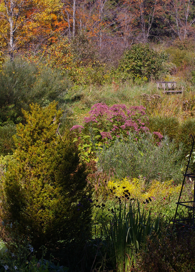 Joe Pye Weed, texture in the garden