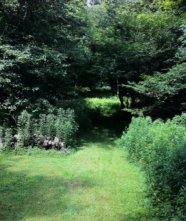 Photo 7: A before view of an overgrown area in Julia Clay's garden.