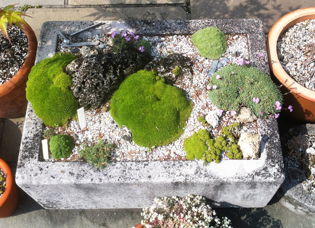 Alpines in hypertufa pot