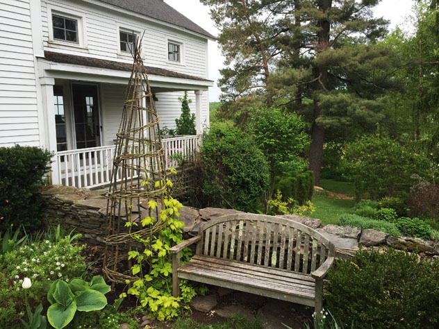 Creating vertical elements in the garden rooting for ideas for Hops garden designs