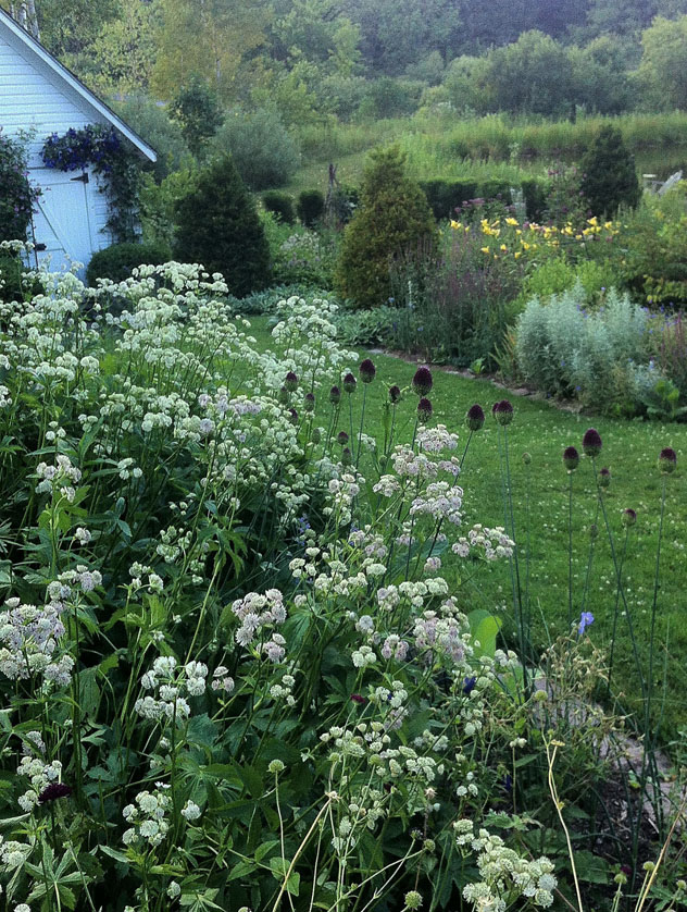 Astrantia major foreground and Artemesia ludoviana right side