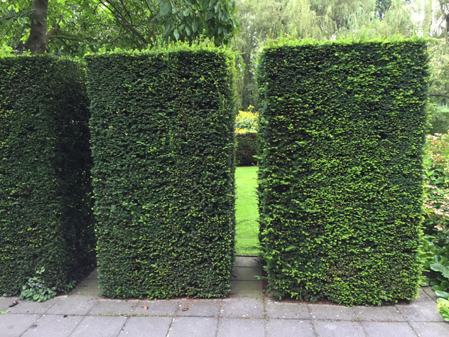 Yew Hedges with openings create positive and negative spaces
